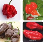 RED HOT CHILI PEPPERS COASTER SET OF FOUR